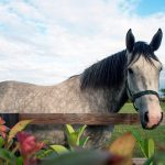horse on the grounds of clanard court hotel, irish weddings, couple photography
