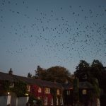 Rathsallagh House Wedding, birds flying over Rathsallagh