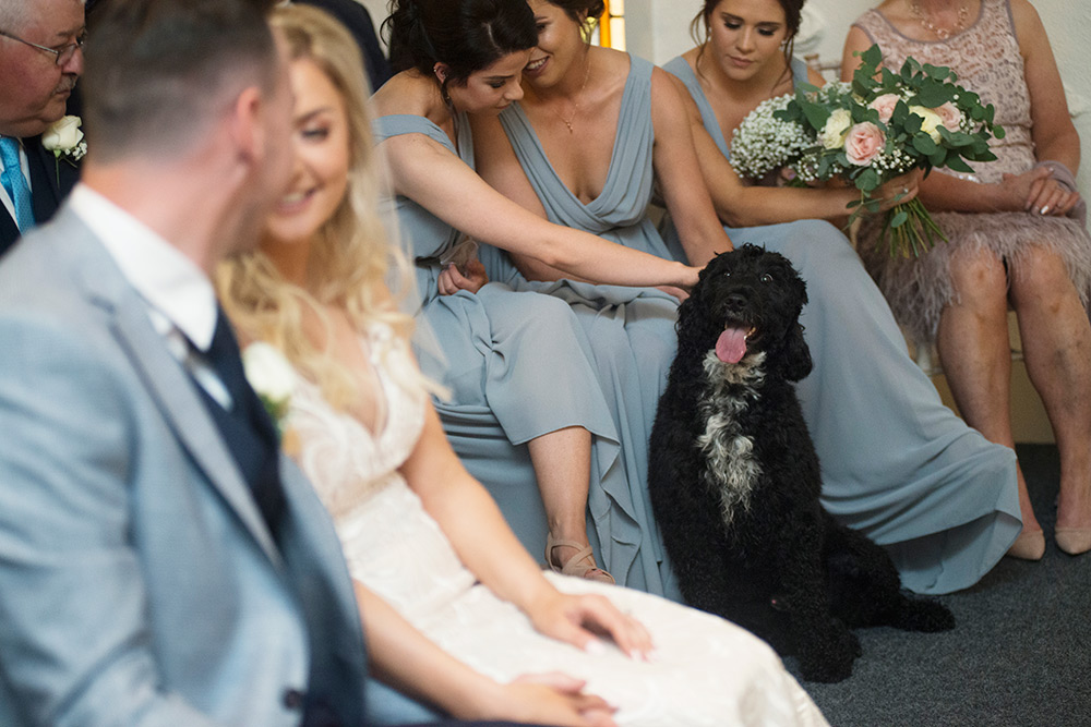 dog at wedding at rathsallagh house wedding