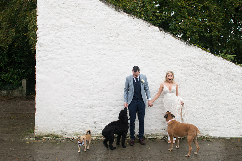 dogs at your irish wedding