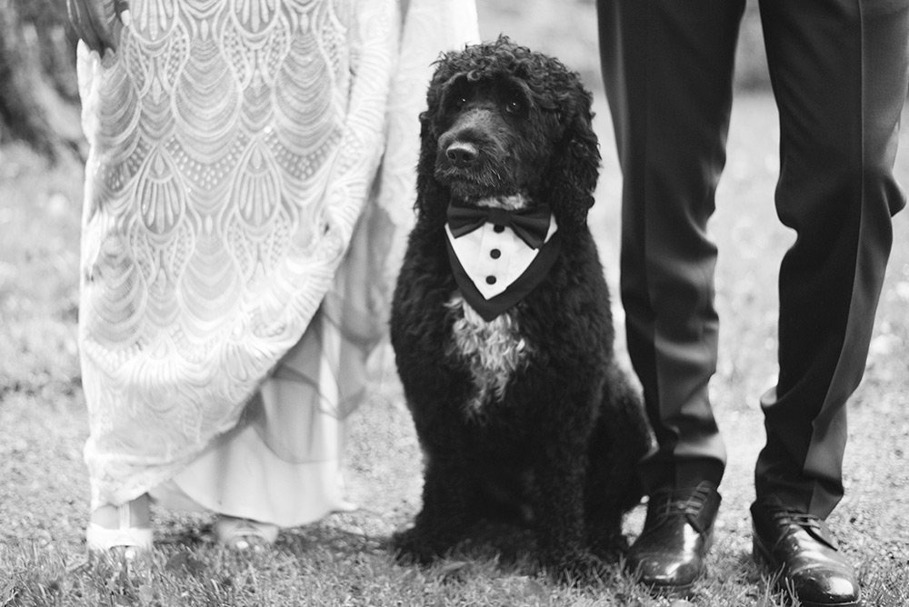 dog at your wedding at rathsallagh hosue hotel