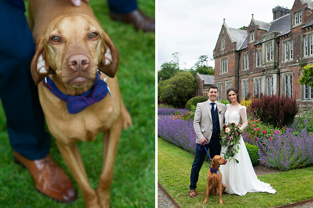 dog at your wedding in wexford